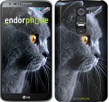 """Чехол на LG G2 Красивый кот """"3038u-37"""""""