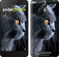 "Чехол на Xiaomi Redmi Note 2 Красивый кот ""3038c-96"""