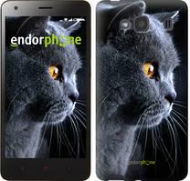 """Чехол на Xiaomi Redmi 2 Красивый кот """"3038c-98"""""""