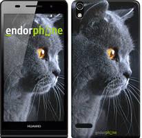 "Чехол на Huawei Y6 II Красивый кот ""3038u-338"""