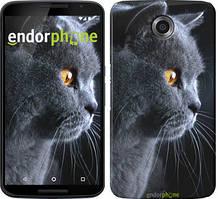 "Чехол на Nokia Lumia 1520 Красивый кот ""3038u-314"""