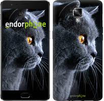 """Чехол на OnePlus 3 Красивый кот """"3038u-334"""""""