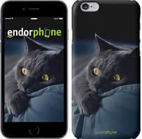 "Чехол на iPhone 6 Plus Дымчатый кот ""825c-48"""