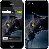 "Чехол на iPhone 5 Дымчатый кот ""825c-18"""