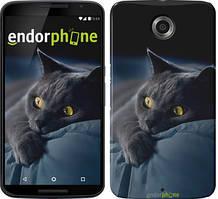"""Чехол на Nokia Lumia 1520 Дымчатый кот """"825u-314"""""""