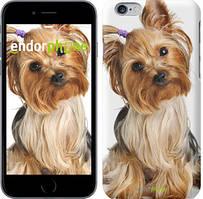 """Чехол на iPhone 6 Plus Йоркширский терьер с хвостиком """"930c-48"""""""