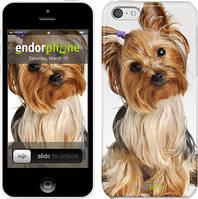 """Чехол на iPhone 5c Йоркширский терьер с хвостиком """"930c-23"""""""