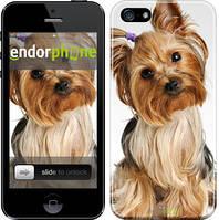 """Чехол на iPhone 5 Йоркширский терьер с хвостиком """"930c-18"""""""