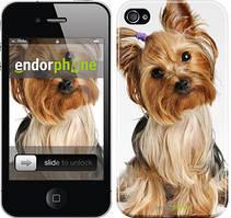 """Чехол на iPhone 4 Йоркширский терьер с хвостиком """"930c-15"""""""