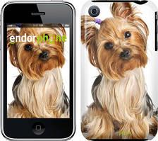 """Чехол на iPhone 3Gs Йоркширский терьер с хвостиком """"930c-34"""""""