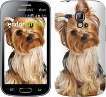 "Чохол Samsung Galaxy S Duos s7562 zka Йоркширський тер'єр з хвостиком ""930c-84"""