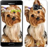 """Чехол на Samsung Galaxy A3 (2016) A310F Йоркширский терьер с хвостиком """"930c-159"""""""