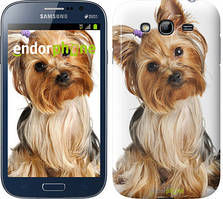 "Чехол на Samsung Galaxy Grand Neo I9060 Йоркширский терьер с хвостиком ""930c-112"""