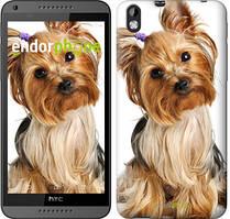"""Чехол на HTC Desire 816 Йоркширский терьер с хвостиком """"930u-169"""""""