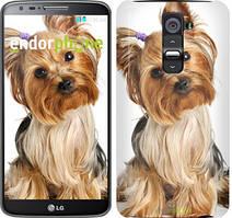 """Чехол на LG G2 Йоркширский терьер с хвостиком """"930u-37"""""""