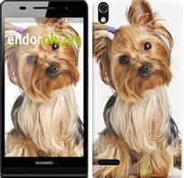 """Чехол на Huawei Y6 II Йоркширский терьер с хвостиком """"930u-338"""""""