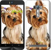 """Чехол на Asus ZenFone Selfie ZD551KL Йоркширский терьер с хвостиком """"930u-116"""""""