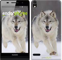 "Чехол на Huawei Y6 II Бегущий волк ""826u-338"""