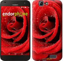 """Чохол на Huawei Ascend G7 Червона троянда """"529u-147"""""""