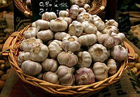 Защита чеснока и лука от болезней