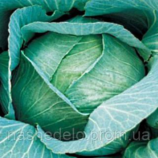 Семена капусты б/к Амагер Дауер 500 гр. Коуел (Хортус)