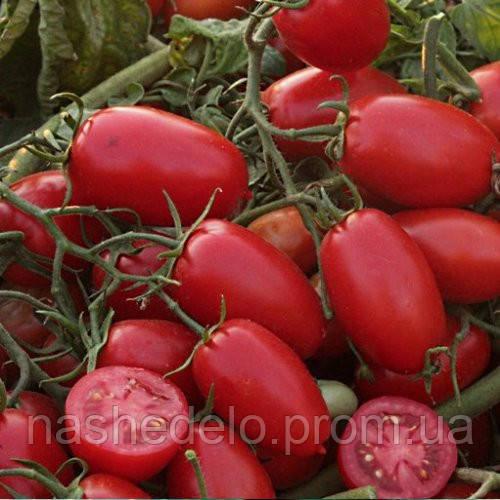 Семена томата Брисколино 10000 сем. Професийне насиння