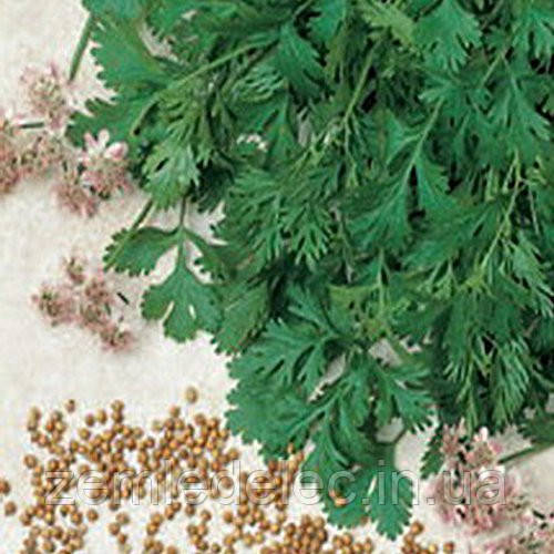 Семена кориандра Карибе 500 гр. Bejo