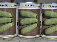 Семена кабачка Асма F1 (Clause) 500 семян - ранний гибрид, светлый
