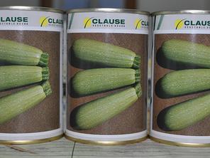 Семена кабачка Асма F1 (Clause) 500 семян — ранний гибрид, светлый, фото 2