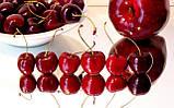 """Конфеты натуральные """"Фрутим яблочно-вишневый"""" 25 грамм, фото 2"""