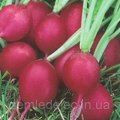 Семена редиса Кармен 20 гр. Элитный ряд