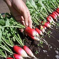 Семена редиса Мила (французский завтрак) 20 гр.Элитный ряд