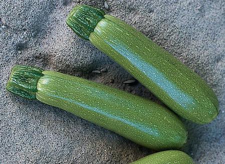 Семена кабачка Мостра F1 (Clause) 500 семян — ультра-ранний гибрид, зеленый, фото 2
