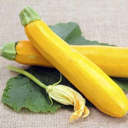 Семена кабачка Мери Голд F1 (Clause), 500 семян — ранний гибрид, золотисто-желтый., фото 2