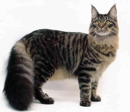 Корм для кошек крупных пород с уткой и курицей Brit Care Cat Tobby Large