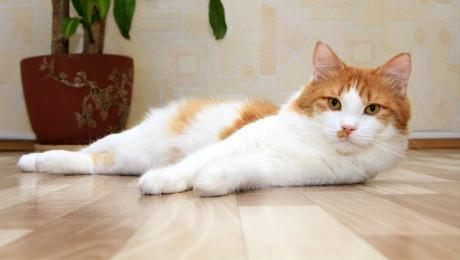 Корм для кошек с чувствительным пищеварением с ягненком и лососем Brit Care Cat Lilly Digestion