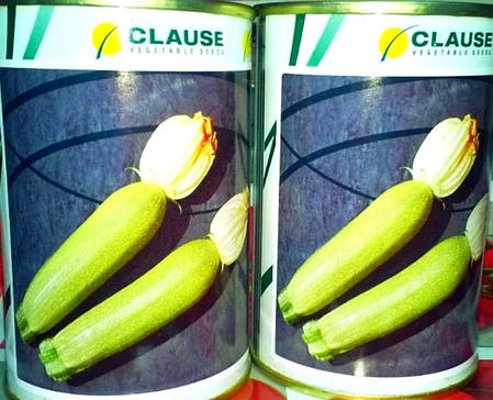 Семена кабачка Алия F1 (Clause), 500 семян — ранний гибрид, светлый, фото 2