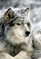 Набор алмазной вышивки Волк в снегу 30 х 40 см (арт. FS333) , фото 1