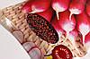 Семена редис 18 дней (длинный) Gold 20г Красный (Малахiт Подiлля), фото 4