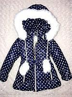 Тёплая зимняя куртка на девочку в горошек, с капюшоном, размеры 92, 98, производство Украина