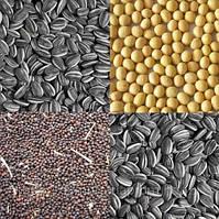 Услуги очистки зерновых и масличных культур от сора и амброзии