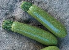Семена кабачка Мостра F1 500 семян