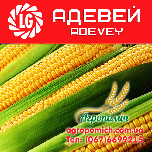 Кукуруза АДЕВЕЙ (ADEVEY)