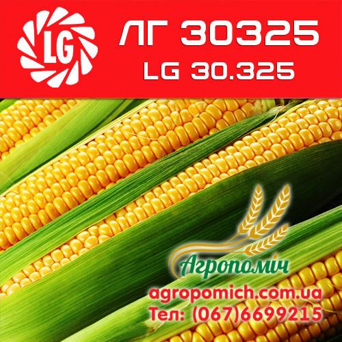 Кукуруза ЛГ 30325 (LG 30.325)
