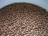 Чечевиця розвариста (чечевица розваристая) 700г