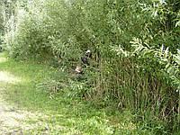 Покос травы в Киеве, фото 1