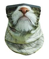 Маска, Buff сердитый кот