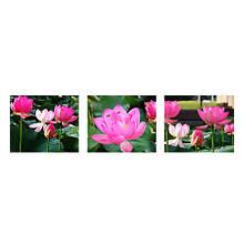 Картини з цифр Квіти лотоса