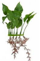 Растение пластиковое Hagen Marina Anubias (Анубиас) (Хаген) 15см