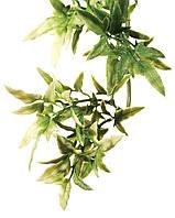 Террариумное растение Hagen Exo Terra CROTON (S)